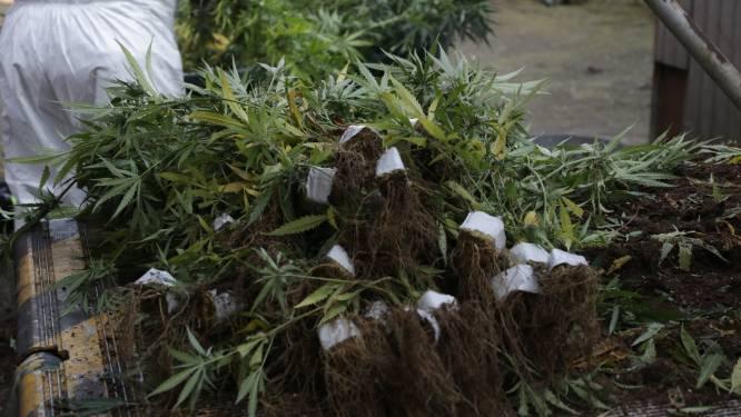 'Garagist' ontkent betrokkenheid bij grote cannabisplantage aan Guldensporenlei