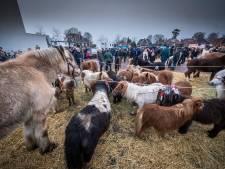 Goor kijkt uit naar eerste wintermarkt nieuwe stijl mét paardenmarkt in het centrum