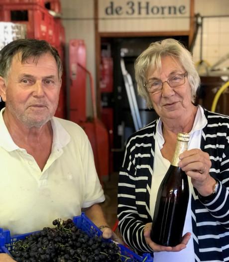 Mijlpaal gehaald: 1000 kilo druiven voor bier, inzameling De 3 Horne gaat door