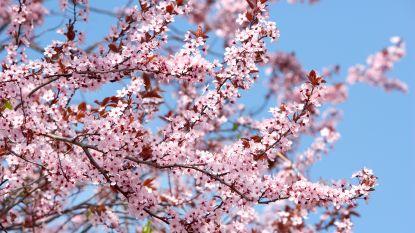 IN KAART: Hier maak je de mooiste lentewandelingen