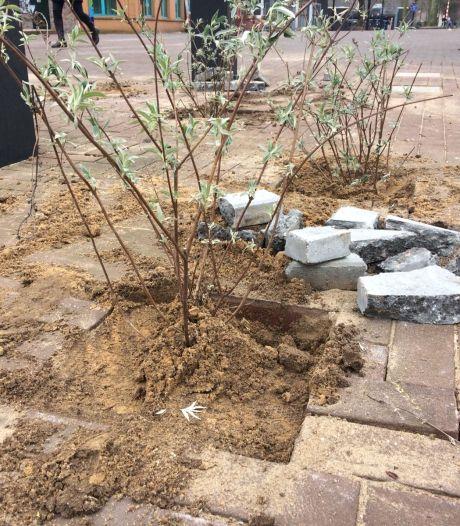 Veel Kampenaren willen hun straat groener maken met Groene Loper