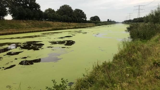 Twentekanaal kleurt groen door eendenkroos: 'Als het water voedselrijk is, groeit zo'n plant razendsnel'