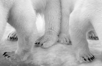 fotoreeks over Dit zijn de winnaars van de 'Wildlife Photographer of the Year'-wedstrijd