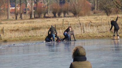 Drama in Brugge: man (74) door het ijs gezakt, nog steeds in levensgevaar na operatie