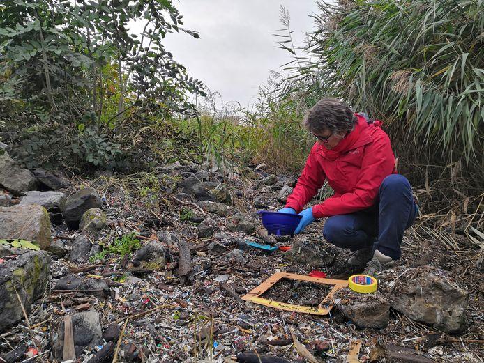 Een vrijwilliger inventariseert de aanwezigheid van plastic pellets in de Scheldebocht.