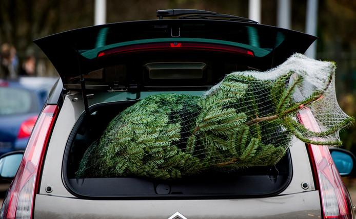 Kerstboom Kopen Dit Is Wat Je Moet Weten Binnenland Ad Nl