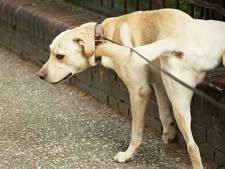 ACM betaalt in zaak over plassend hondje