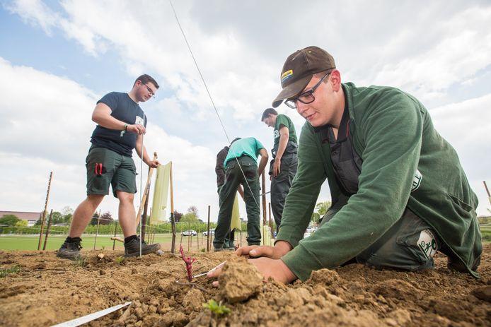 De eerste stokken van de opleidingswijngaard worden op een perceel van de school in de leemgrond geplant. In totaal worden 1.200 stokken geplant, op termijn goed voor meer dan 300 flessen wijn.