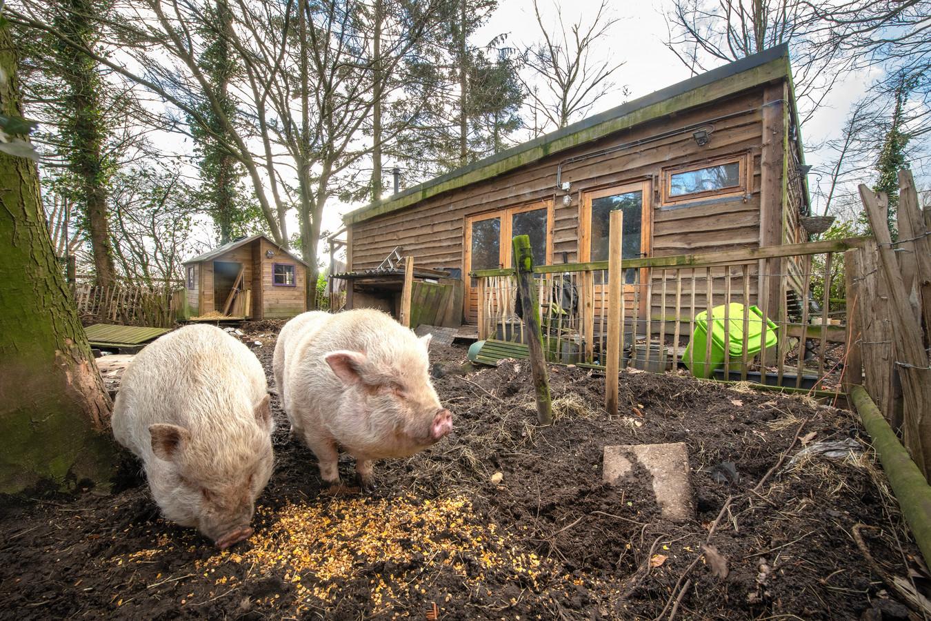 Billy en Betsy hebben het er heerlijk naar de zin. De gemeente vindt echter dat hun paradijsje op het platteland van Beemte-Broekland tegen de vlakte moet.