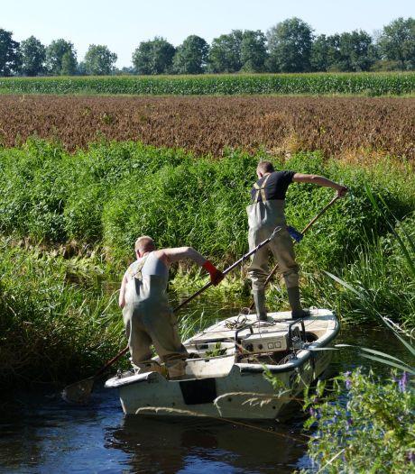 Ecoloog Bart redt verrassend veel vis uit deze opdrogende sloot
