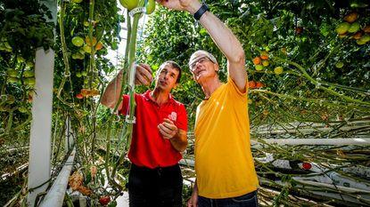 Bourgeois steekt handje toe in tomatenbedrijf