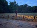 De boswachter dirigeert de kleine zwijnen richting de bossen.