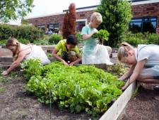 Rode bietjes, spinazie, broccoli: Drieduizend gratis zadenpakketten voor scholen en bso's