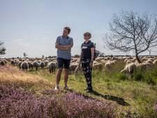 Re-integreren tussen de schapen op de Strabrechtse Hei in Geldrop