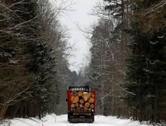 Europeanen vragen EU bossen niet voor energie te verbranden