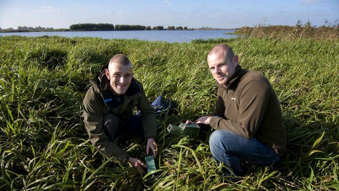 Nieck Alderliesten (links) en Martijn van Schie controleren enkele vallen in De Groene Jonker, het moerasgebied waar sinds kort ook de noordse woelmuis voorkomt.