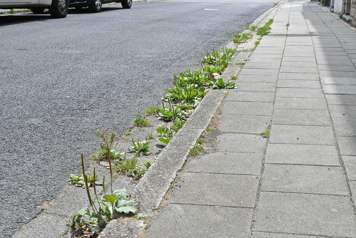 Illustratiebeeld-Het vele onkruid langs de wegen ontsiert het openbaar domein.