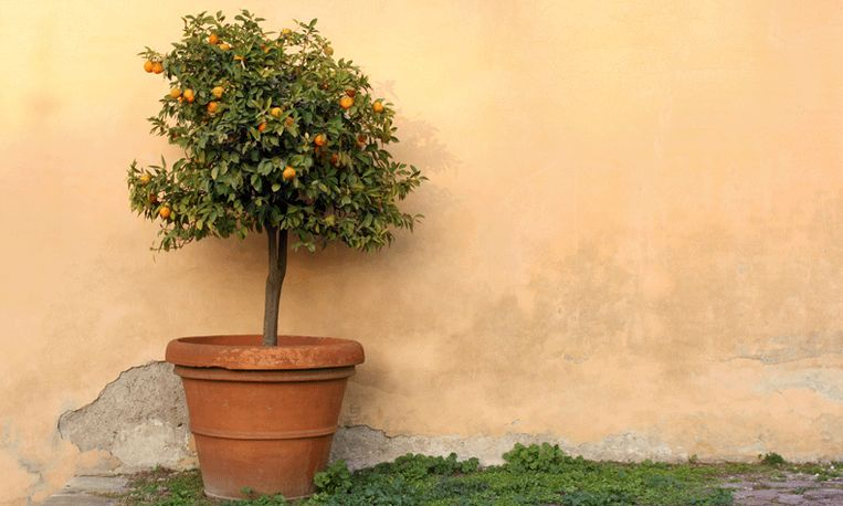 Ben jij een echte sinaasappelkenner? Doe de quiz en win!
