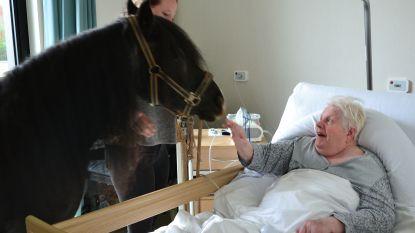 """Met pony tot op derde verdieping woonzorgcentrum: """"Senioren reageren fantastisch"""""""