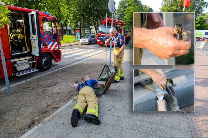 Brandweerlieden zetten net als zaterdag alle zeilen bij om twee jonge eendjes te redden uit een rioolbuis.