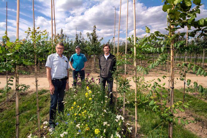 Bert Snel (links) en Peter Mulder (midden) en gastheer Niels Mauritz tussen de laanbomen met bloemenstroken. Foto: Gerard Burgers.