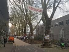 Blijven deze bomen langs het spoor in Den Bosch nou wel of niet staan? Er komt wéér een nieuw onderzoek