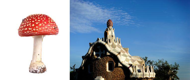 In mozaïeken in Park Guëll in Barcelona verwerkte  de Spaanse architect Antoni Gaudí het beeld van de vliegenzwam.  Beeld Getty