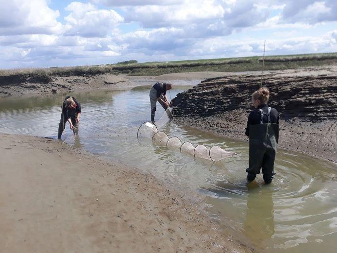 De fuiken worden in het water geplaatst.