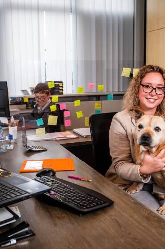 """Vandaag is internationale 'Take Your Dog to Work Day'. Deze dierenliefhebbers zien niets dan voordelen: """"Je wordt er helemaal zen van"""""""