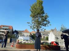 Heerlijke Orde schenkt Breda jubileumboom voor Stadserf: 'Misschien kan vergroening zo duwtje worden gegeven'