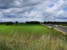 Zonnepark van zeventig voetbalvelden groot komt langs A73: 'Je kunt er schapen onder laten lopen'