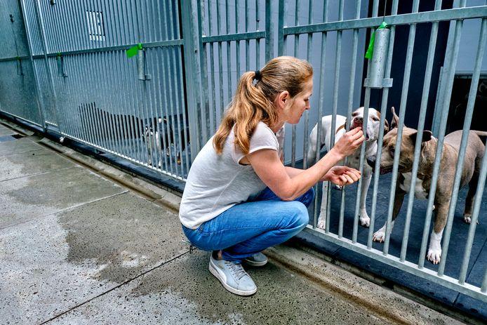 Het dierenpension van dierenzorgcentrum Louterbloemen is overvol, net als alle andere in de regio.