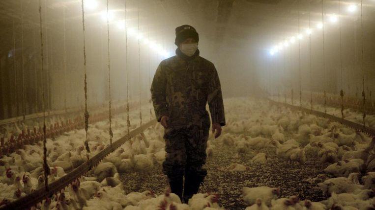 De documentaire reeks 'Rotten' legt de corruptie en fraude in de voedingsindustrie bloot. Beeld Netflix