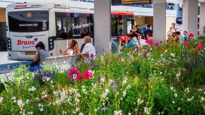Tilburg wil gesprek met Arriva over schrappen busdiensten, 'Tegenstrijdige beweging'