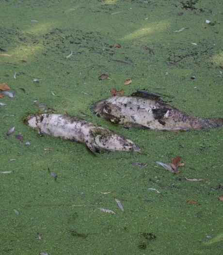 Foutje bij maaiactie in Bunschoten heeft desastreuze gevolgen: 15 vissen leggen het loodje