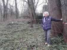Zaag gaat in deel bos Elderveld, want 'bunzing niet bedreigd'