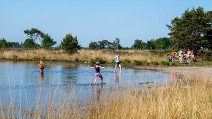 IN BEELD: Ondanks feestdag en zonnige weer geen overrompeling op de Kalmthoutse Heide