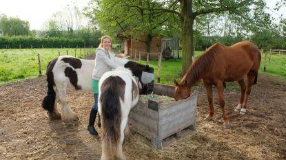 Nieuwe kinderboerderij De Madeliefjes wil jongeren rustpunt bieden