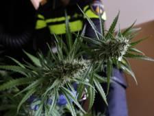 Politie vindt grote wietplantage in bedrijfspand Ulft na tip: twee arrestaties