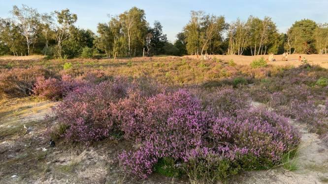 """Stabroek zegt voorwaardelijk ja tegen Nationaal Park Kalmthoutse Heide: """"Eisen wel rechtszekerheid voor  betrokken eigenaars"""""""