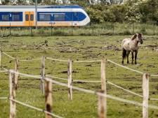 Groeiende bezorgdheid over konikpaarden in Oostvaardersplassen: 'Regel gewoon beschutting!'