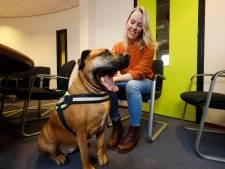 Sientje is een hond in de hulpverlening: 'Ze imponeert vooral door haar uiterlijk'