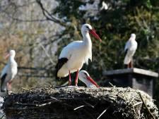 Vogelbescherming: 'wijs nieuwe Natura2000-gebieden aan in Overijssel'