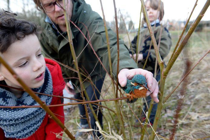 Vogelaar Sjoerd zet Fladder, zoals de jongens de ijsvogel hebben genoemd, weer uit.