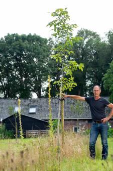 Wie in Bronckhorst een monumentale boom op zijn land wil, krijgt die gratis: 'Maar er is wel toewijding voor nodig'