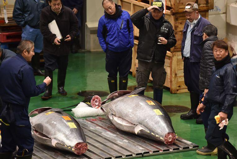 Handelaars verzamelen zich om de enorme tonijn van 278 kilo op de beroemde vismarkt in Tokyo in Japan. Beeld AFP