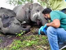 Indiase dorpelingen vinden dode kudde olifanten, dieren mogelijk geraakt door bliksem