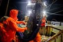 Visserij is een van de hoofdpijndossiers in de brexit-onderhandelingen.