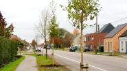 Stad plant 256 bomen aan