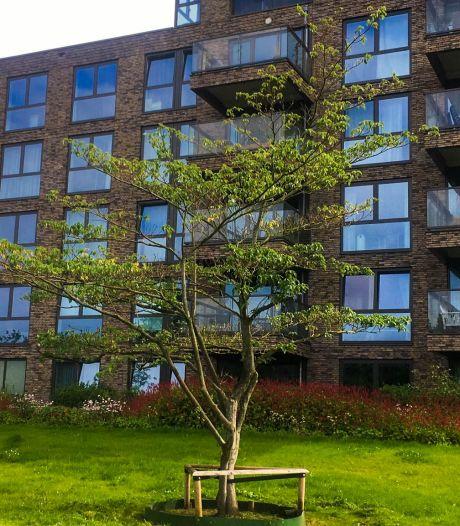 45 jaar oude boom legt reis van 100 kilometer af naar nieuwe plek in Amersfoort